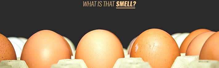 Rotten egg smell in water