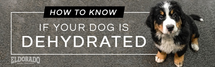 How do you know if your dog is dehydrated